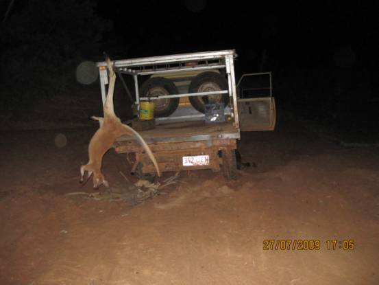 The Adavale Kangaroo Shooter